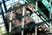 Monkey man in cage — Stock Photo