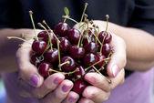 Ripe fresh berries of a cherry — Stock Photo