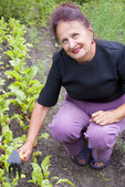The happy smiling woman works on a garden site — Stockfoto