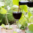 Red wine bottle, glass, young vine — Stock Photo