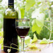 Red wine bottle, glass, young vine — Foto de Stock