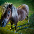 Brown horse in evening light - Stock Photo