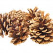 Few fir cones.Isolated. — Stockfoto