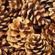 Fir cones.Background. — Stock Photo #10784173