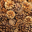 Fir cones taken closeup.Background. — Stok fotoğraf