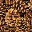 Fir cones as background. — Stock Photo #10784186