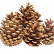 Fir cones. — Stock Photo #10784190