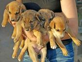 Piccoli cuccioli. — Foto Stock