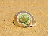 Nacreous conch shell on sandy beach. — Stock Photo