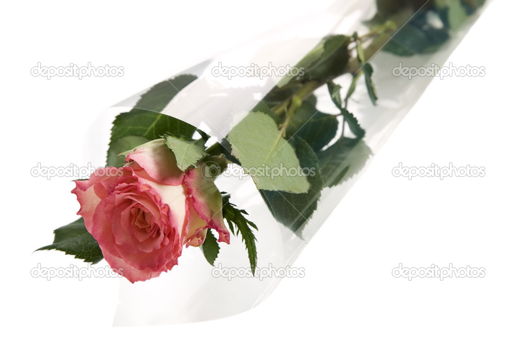 A colorful rose wrapped in plastic paper — Stockfoto #11012034