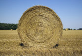 Many haycocks in the field — Stock Photo