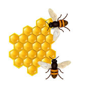 Honeycombs with honey bees — Stock Vector