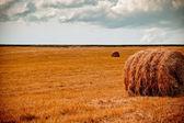 農村フィールドのフォア グラウンドで干し草ベール — ストック写真