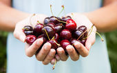 Handful of cherries — Stock Photo