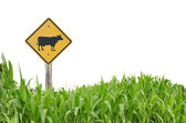 Cow traffic symbol — Stock Photo