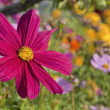 Blossom pink flower in a sunlight day — Stock Photo