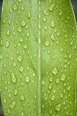 Yeşil yaprak üzerinde su damlası — Stok fotoğraf