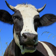 Head of a cow against the sky — Lizenzfreies Foto