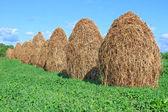 Hay in stapels — Stockfoto