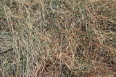 Hay in a background photo — Stock Photo