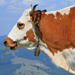 图库照片: Head of cow against mountains