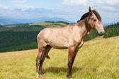 Häst på en fäbod berg — Stockfoto