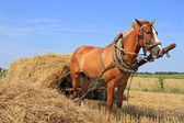 Transportation of hay by a cart — Foto Stock