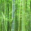 Royalty-Free Stock Photo: Green bamboo forest
