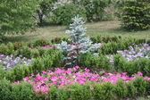Piękne kwiaty w ogrodzie — Zdjęcie stockowe