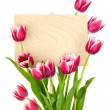 Beautiful Tulips and Empty Sign for message / wooden panel / iso - 图库照片