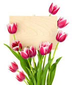 Beautiful Tulips and Empty Sign for message / wooden panel / iso — 图库照片