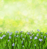 Blue flowers into green grass with water drops on defocused bac — Stock Photo