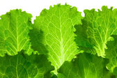 Fresh Lettuce / leaes isolated on white background / close-up — Stock Photo