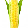 Ear of Corn / vertical / isolated on a white background — Stock Photo #11782777