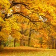 Autumn / Gold Trees in a park — Photo