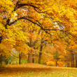 Autumn / Gold Trees in a park — Stockfoto #11782835