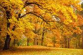 Herfst / gouden bomen in een park — Stockfoto