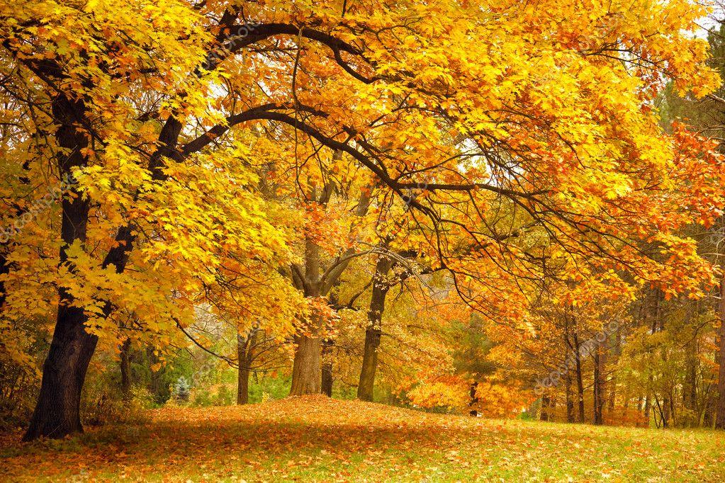 Фотообои Осень / золото деревья в парке
