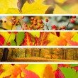 Set of 5 Different Autumn's Banners — Stock Photo