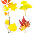 Composition Set of Beautiful Autumn Leaves / isolated — Foto de Stock   #11980437