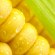 Grains of Ripe Corn with Green Leaf/ Extreme Macro / Yellow back — Stock Photo