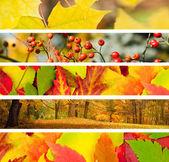 Set di banner 5 diversi di autunno — Foto Stock