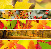 Set of 5 Different Autumn's Banners — Stockfoto