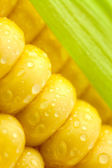 Grains of Ripe Corn with Green Leaf/ Extreme Macro / Yellow back — Foto de Stock