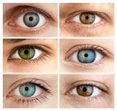 Conjunto de 6 olhos abertos / grande tamanho real, diferente — Foto Stock