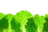 Fresh Lettuce Border / leaves isolated on white — Stock Photo