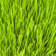 Lush grass — Stock Photo #11707450