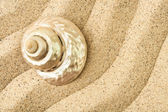 Shell on a sand — Stock Photo