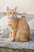 Orange tabby cat on stair-step. — Stock Photo