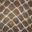 Snakeskin — Stock Photo #11374005